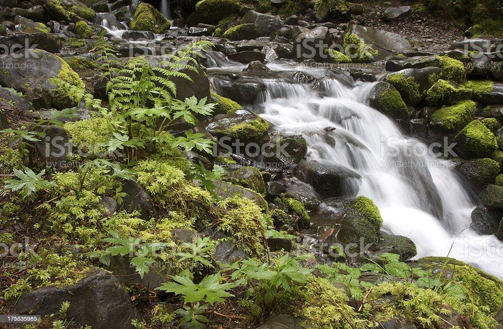 Lush Vegetation And Cascades royalty-free stock photo