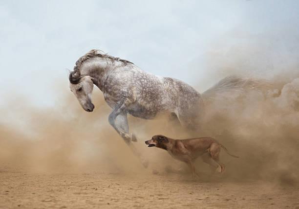 Lusitanian horse picture id473289514?b=1&k=6&m=473289514&s=612x612&w=0&h=iesd1lcsb4lwfffjngqhwskzm ztttddaajwqwge7dm=