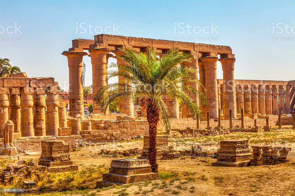 Luxor Temple and a palm tree stock photo