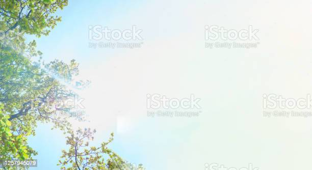 Photo of Luxuriant bright green trees and sun lights against bright clear blue sky