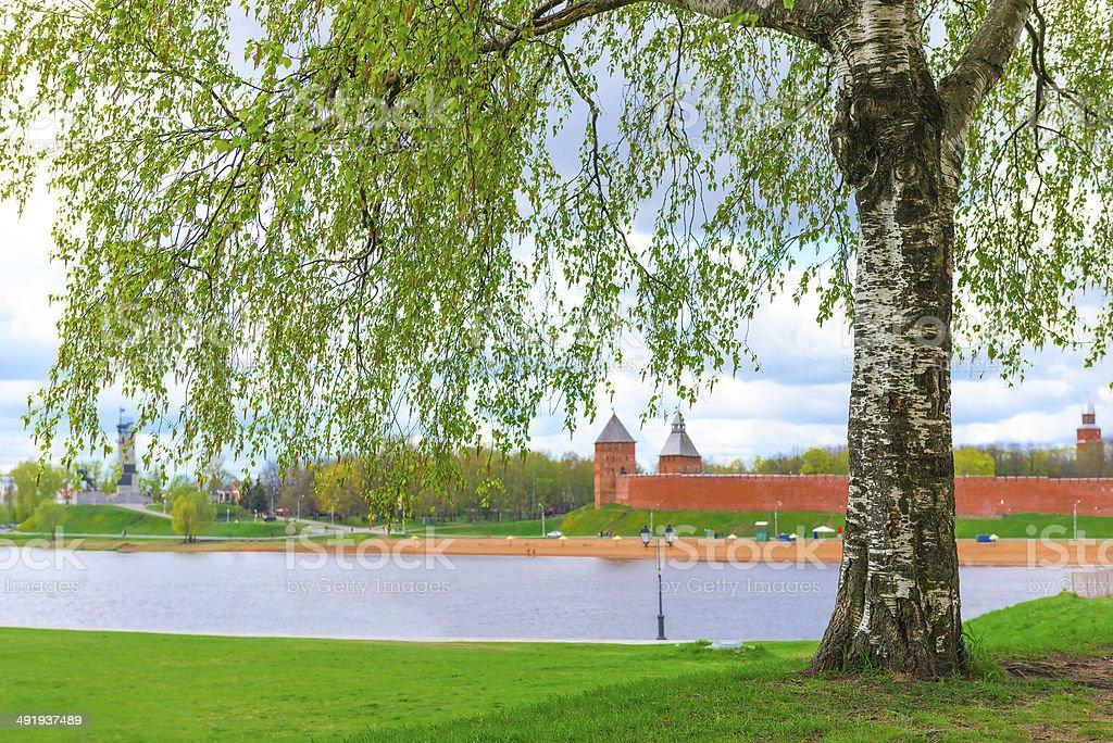 luxurious birch on a background of the Novgorod Kremlin royalty-free stock photo