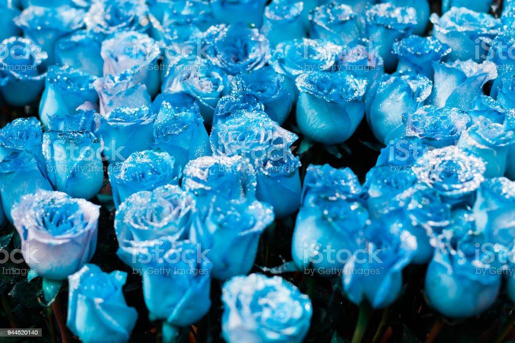 Luxus-Blumen - blaue Rosen – Foto