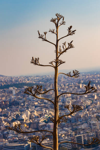 Lycabettus Hill Viewing Area in Greece stock photo