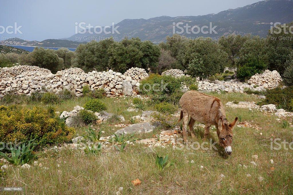 Lycian countryside, Likya Yolu Hiking Trail, Turkey foto royalty-free