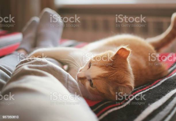 Lying and relaxing in bed with cat opposite the window on a sunny day picture id937350810?b=1&k=6&m=937350810&s=612x612&h=d65q5ndw3xkkgq63o7a6ztzidnyw9ep oidl37sgi3a=