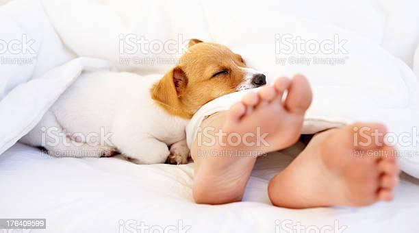 Lying at my owners feet picture id176409599?b=1&k=6&m=176409599&s=612x612&h=lvxdtocshznka8ln1v6iznpju2e6dr2vbjjkaz7hlji=