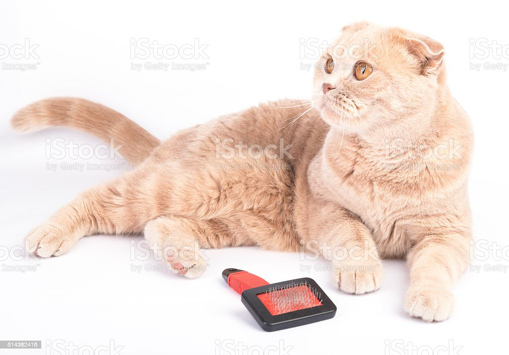 lying cat and combing brush on the white background stock photo