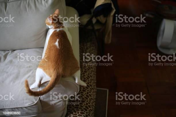 Lying cat picture id1048903650?b=1&k=6&m=1048903650&s=612x612&h=oayv0dugu7jqm4lbnlrajwxhodabnr6tkj 8hfactxu=
