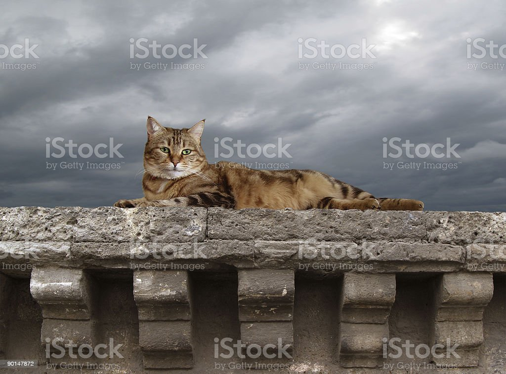 Lying Cat royalty-free stock photo