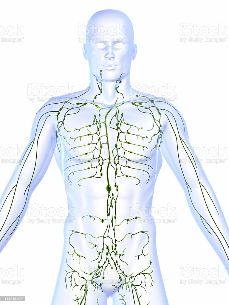 Lymphatic system showing lymph nodes of a human body stock photo
