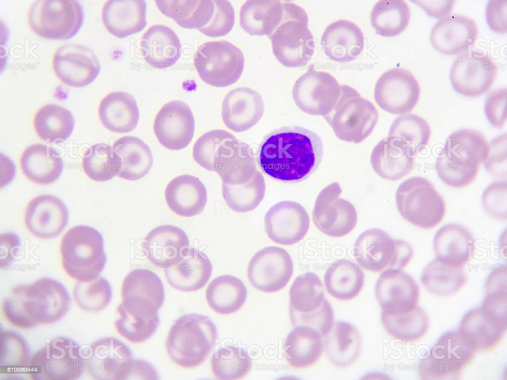 Lymphocyte cell stock photo