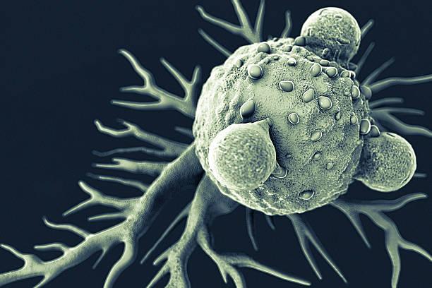t lymphocytes und krebszelle - krebs tumor stock-fotos und bilder