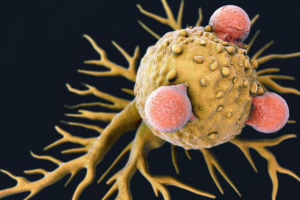 T Lymphocytes and Cancer Cell stock photo