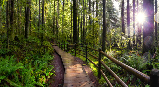 Lynn Canyon Park, North Vancouver, British Columbia, Canada