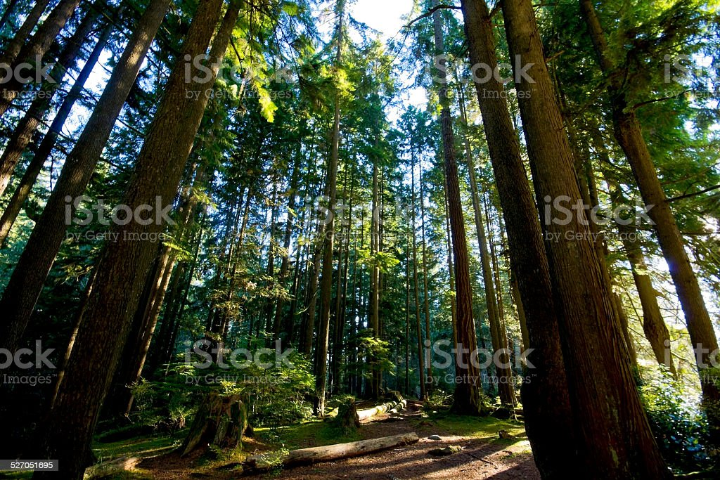 Lynn Valley Park Forest stock photo