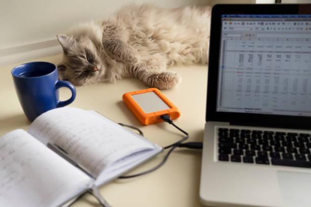 Lynx point ragdoll cat laying on a home office desk behind a laptop picture id1222345576?b=1&k=6&m=1222345576&s=612x612&w=0&h=  12j0dgp6jjaawzrlwwrz7nu0efaxc qigh0lldpne=