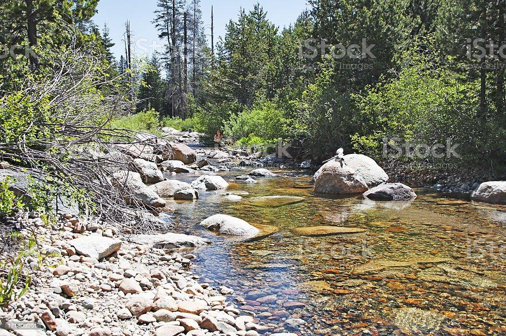 Lyons Creek H royalty-free stock photo