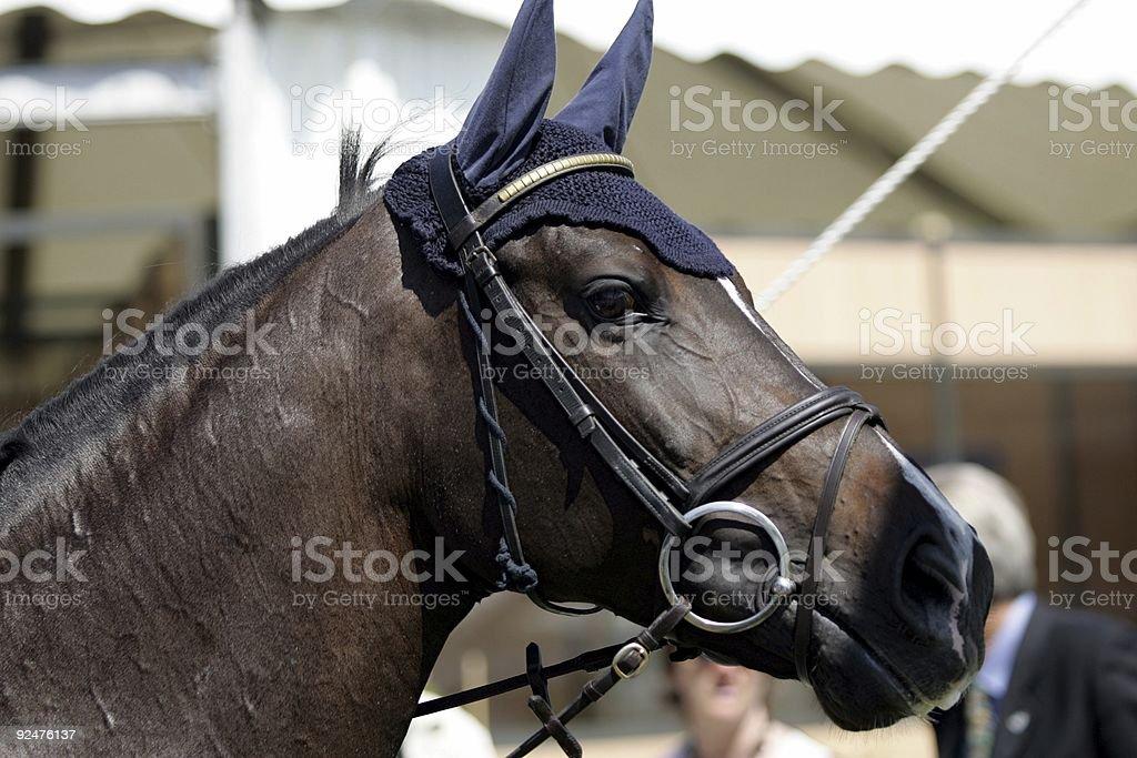 I'm all ears royalty-free stock photo