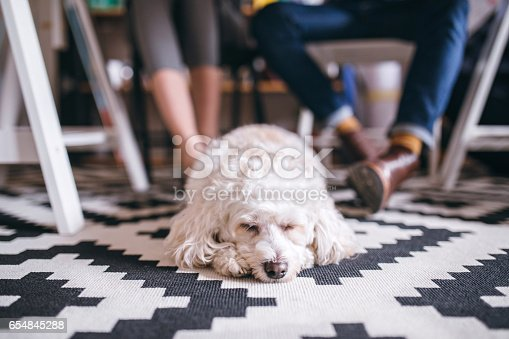 istock I'm going on work with my owner! 654845288