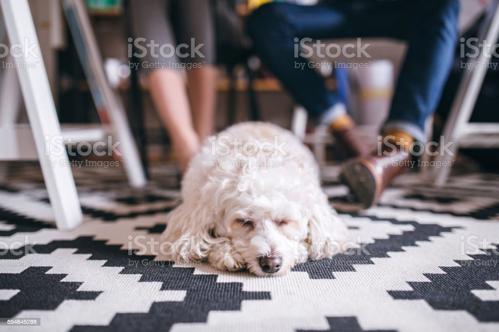 I'm going on work with my owner! stock photo