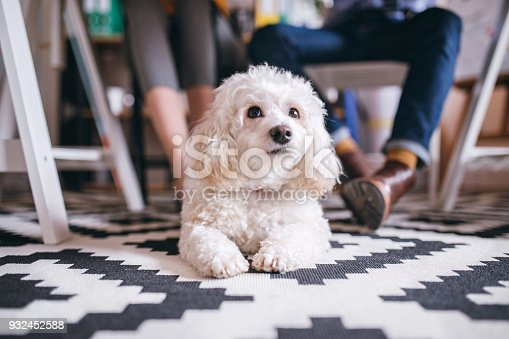 istock I'm going on work with my owner! 932452588
