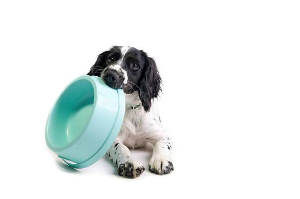 ich habe appetit! - hundenapf stock-fotos und bilder
