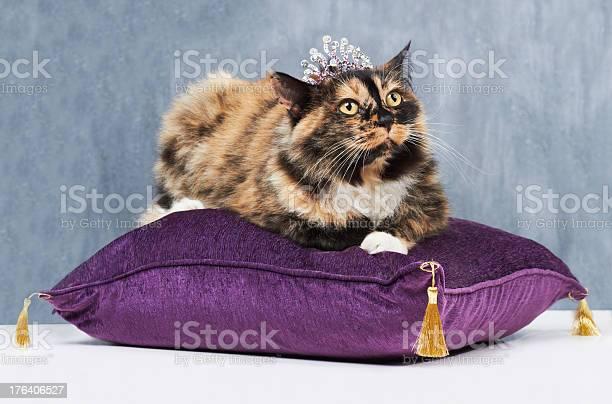 M the queen picture id176406527?b=1&k=6&m=176406527&s=612x612&h=xyp9qr6xppcm4woqhfeae9uidl w6ptkqbu9zyfo814=