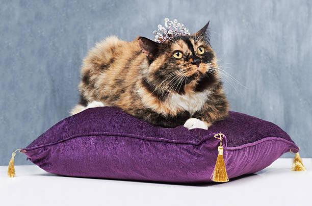 M the queen picture id176406527?b=1&k=6&m=176406527&s=612x612&w=0&h=4q1pcetn i m64 l4llnbynsween1saank 84qbv4se=