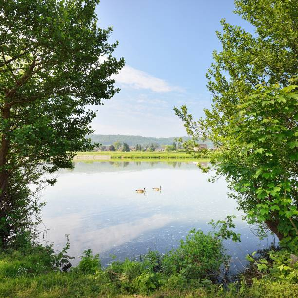 maas, maas rivier in belgië - maasvallei stockfoto's en -beelden
