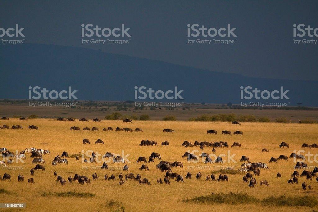 Maasai Mara National Reserve in Kenya stock photo