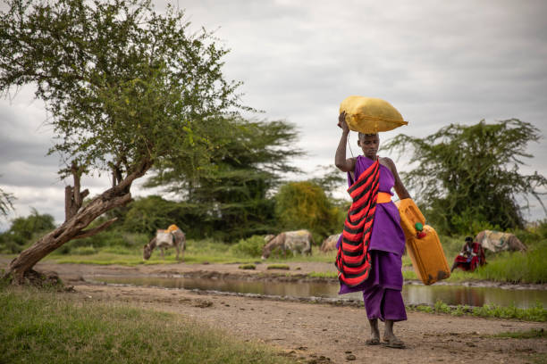 maasai woman traveling with water containers to collect drinking water stock photo