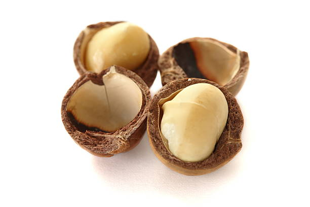 Macadamia isolated on white Macadamia isolated on white macadamia nut stock pictures, royalty-free photos & images