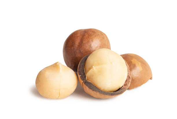 Macadamia nuts isolated on white background. Macadamia nuts isolated on white background. macadamia nut stock pictures, royalty-free photos & images