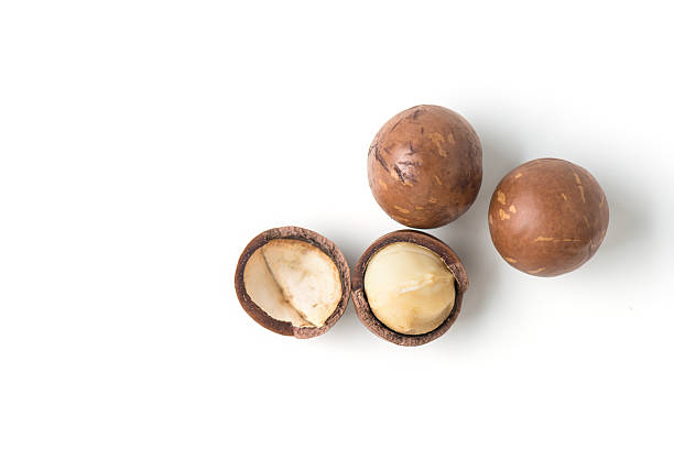 macadamia nuts macadamia nuts on white background macadamia nut stock pictures, royalty-free photos & images