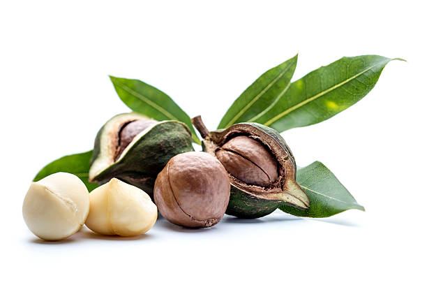 Macadamia nuts with leaves Macadamia nuts with leaves macadamia nut stock pictures, royalty-free photos & images