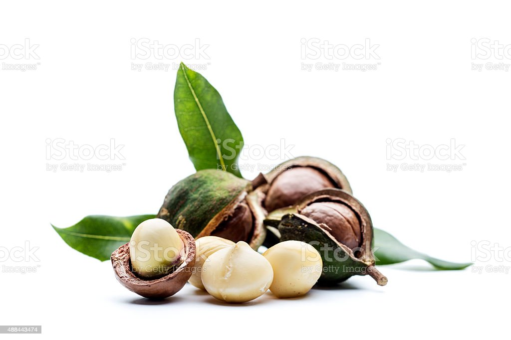 Macadamia nuts with leaves stock photo