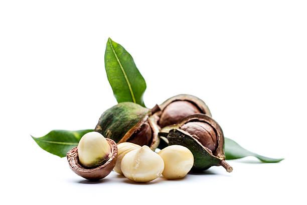 Macadamia-Nüssen mit Blättern – Foto