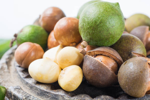 Macadamia nuts with shell - tasty expensive fat nuts Macadamia nuts harvest close up macadamia nut stock pictures, royalty-free photos & images