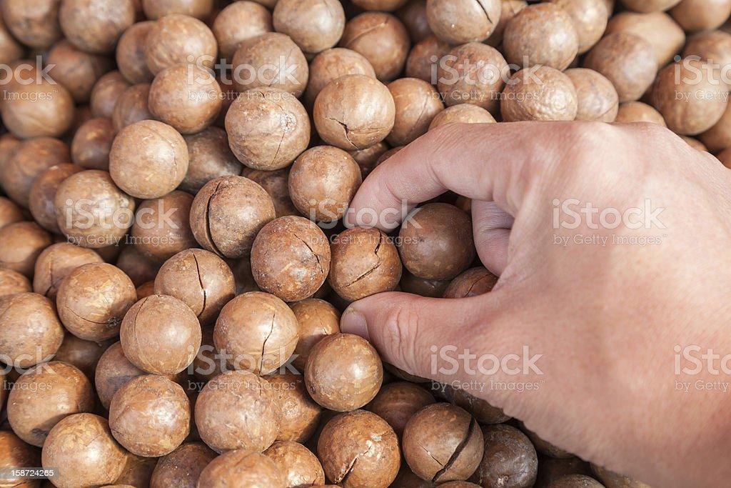 macadamia royalty-free stock photo