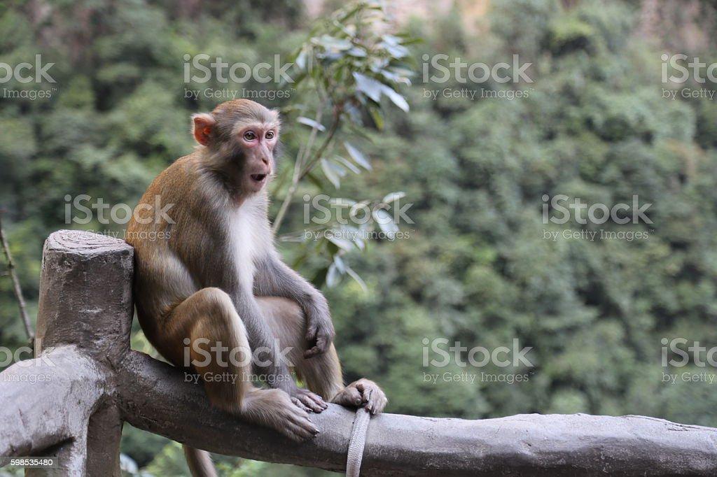 Macaque in China photo libre de droits