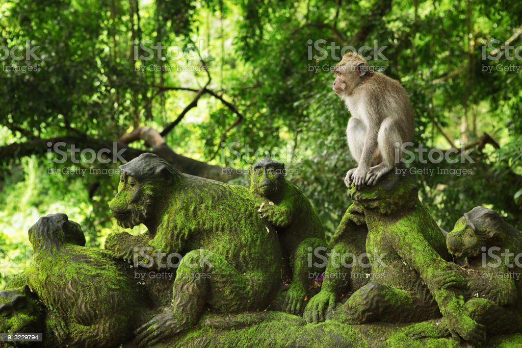 Macaque in Monkey Forest, Bali, Indonesia stock photo