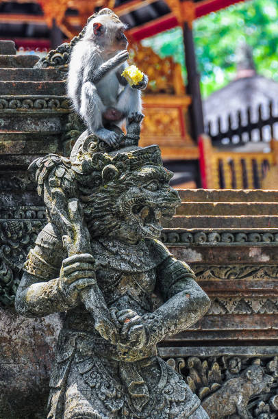 Macaque in the Hindu temple in Monkey Forest in Ubud, Bali stock photo