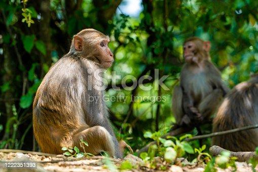Macaque Monkey in Hong Kong