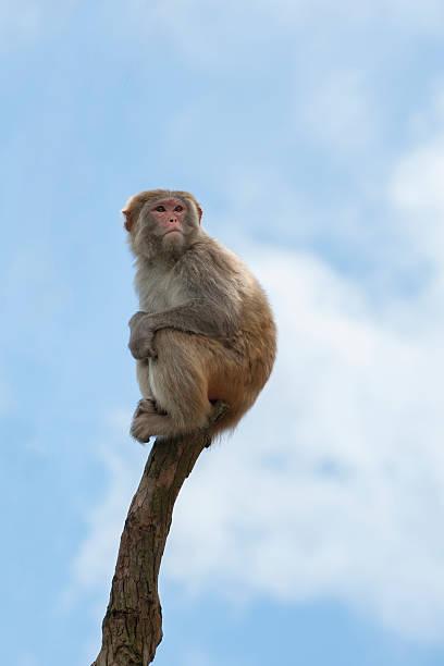 macaco - macaco foto e immagini stock