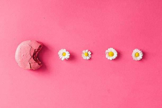 macaroon with daisies on pink background - sommertorten stock-fotos und bilder