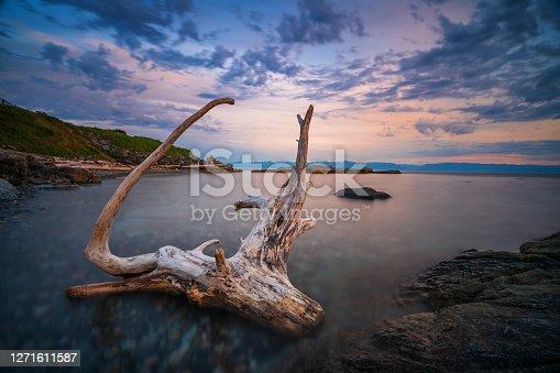 istock Macaulay Point Park Driftwood Esquimalt BC 1271611587