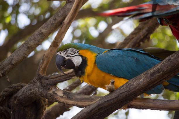 Macaw Bird stock photo