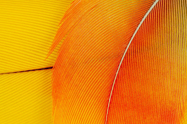 Macaw feathers stock photo