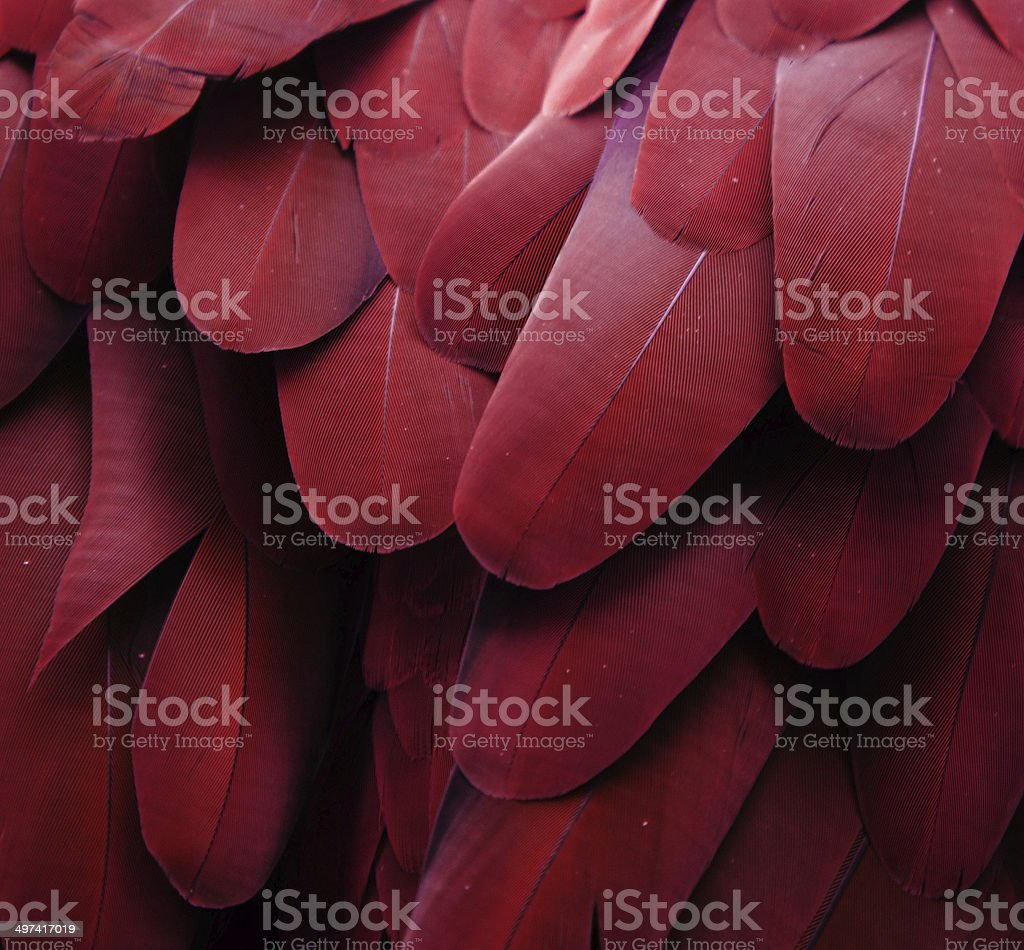 Macaw Feathers (Maroon) stock photo