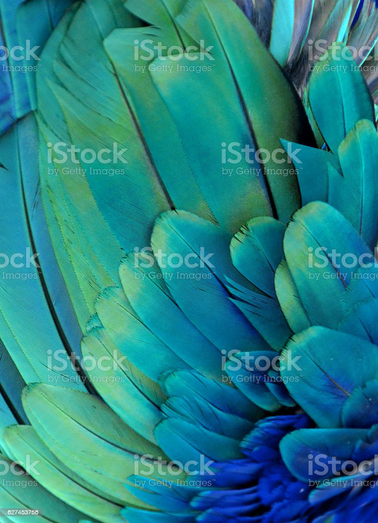 Macaw Feathers (Green/Blue) royalty-free stock photo